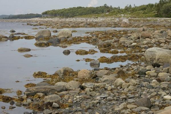 Соловки берег Белого моря